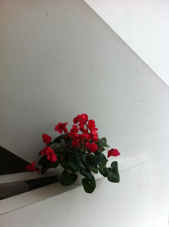 flowers 200315 1