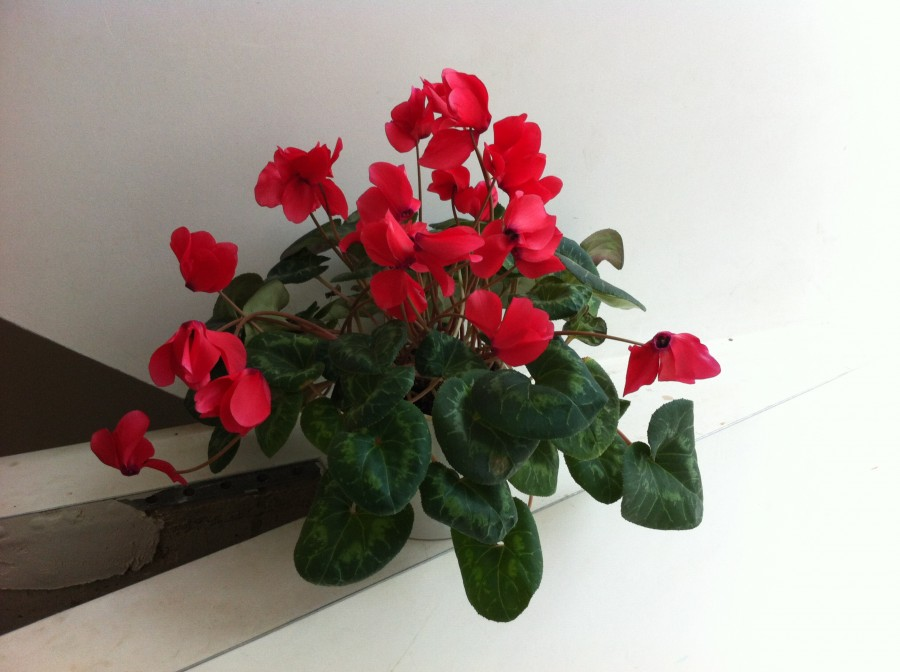 flowers 200315 3