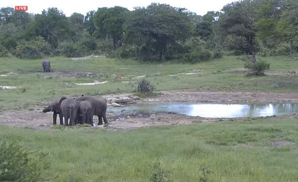 слоники что-то обсуждают