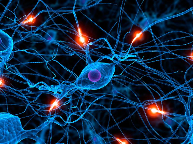 Хочешь, чтоб мозг остался молодым и пластичным? Дави эту молекулу!