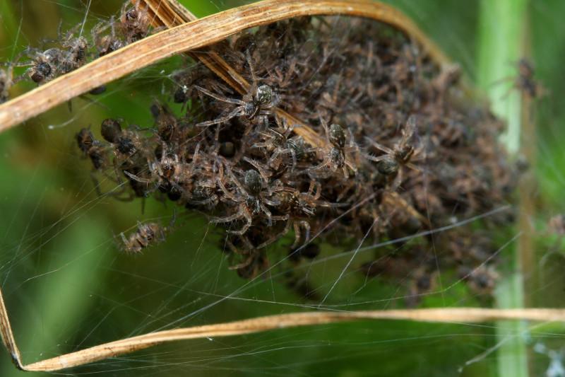 Стивен Кинг, учебник паразитологии, рассказ о муравьином боге и прочие мастера