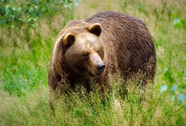 медведь-620x421