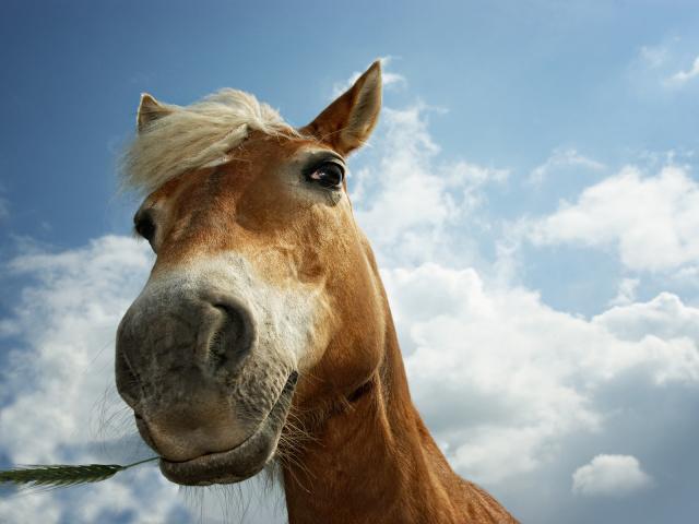 Animals_Horses_Horse_muzzle_025102_29