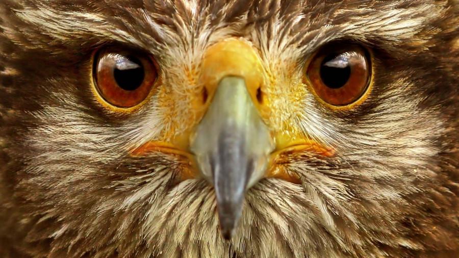 И глаз, как у орла
