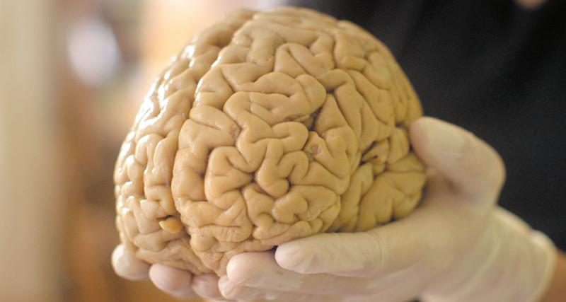 Мозг на вынос