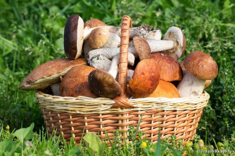Так будут считать грибы в твоей корзинке или нет?