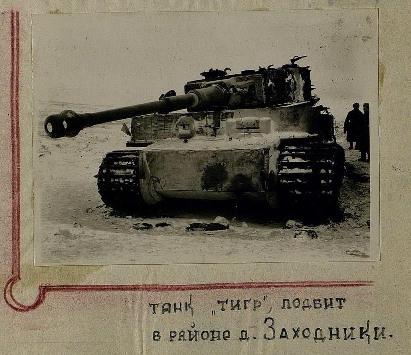 Tiger_Zakhodniki.jpg