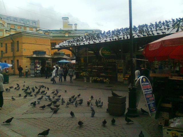 Птицы - копия
