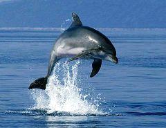 дельфин-1