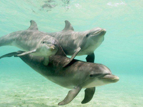 Дельфины семья