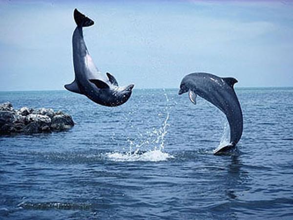 Дельфины-2