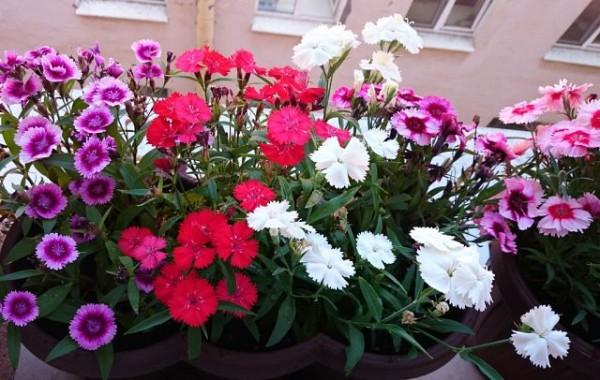 Слабинский цветы за окном 2014