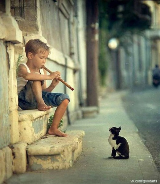 cat and flute