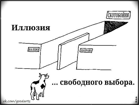 illusion of free choice