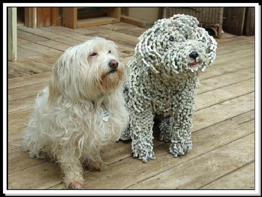 dog-Nirit5