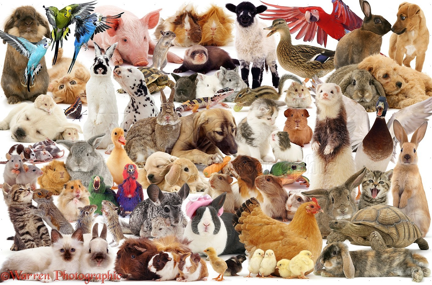17285-Pets-montage-jigsaw-white-background