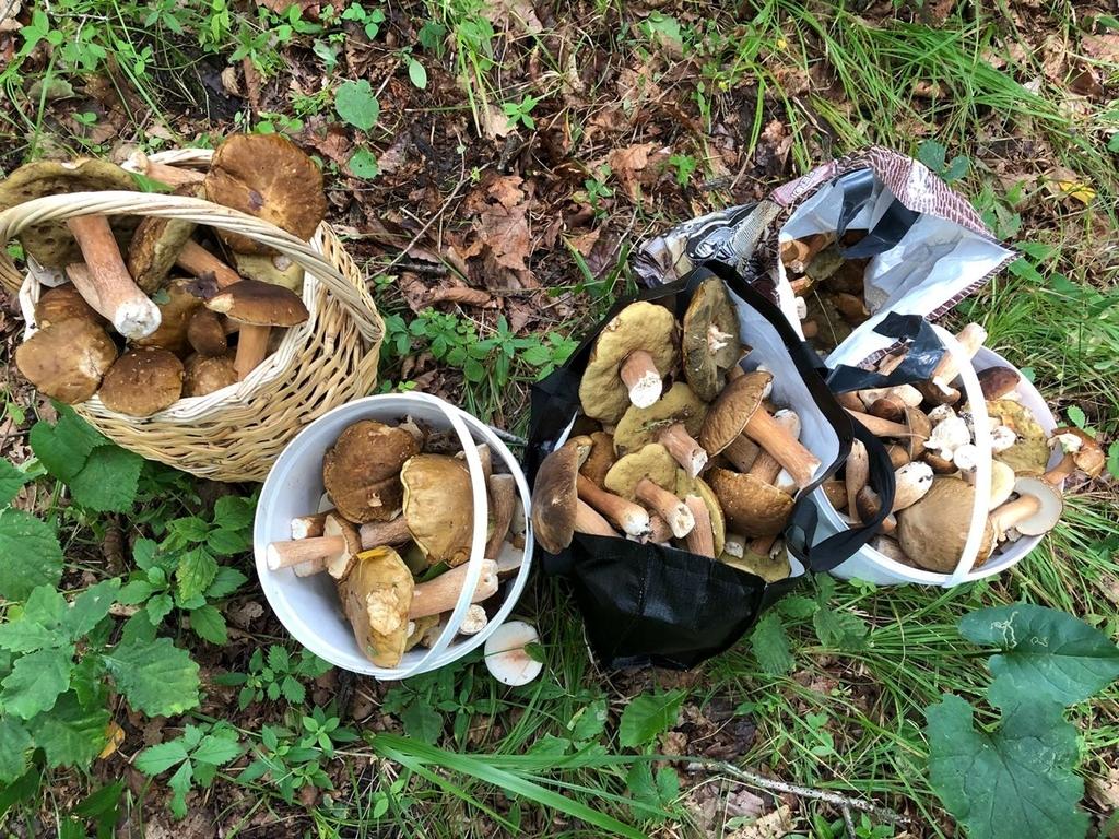 Ой, грибы, грибы-грибочки! Часть III