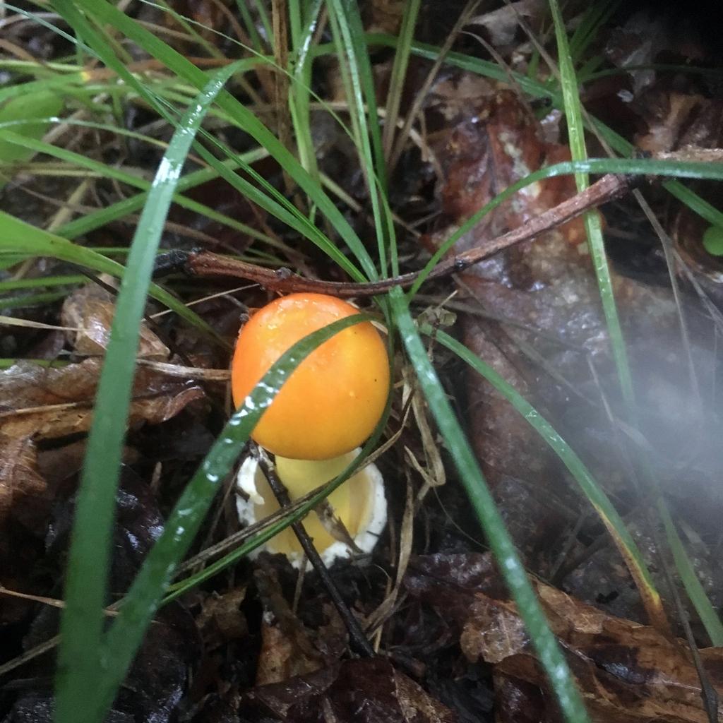Ой, грибы, грибы-грибочки!