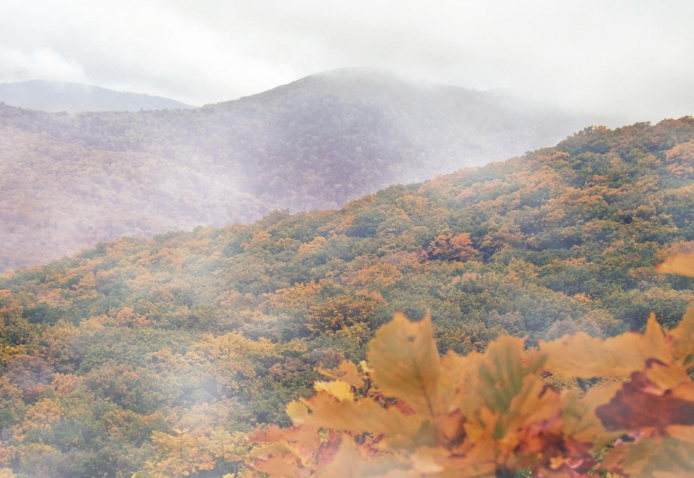 Сихотэ-Алиньский туман