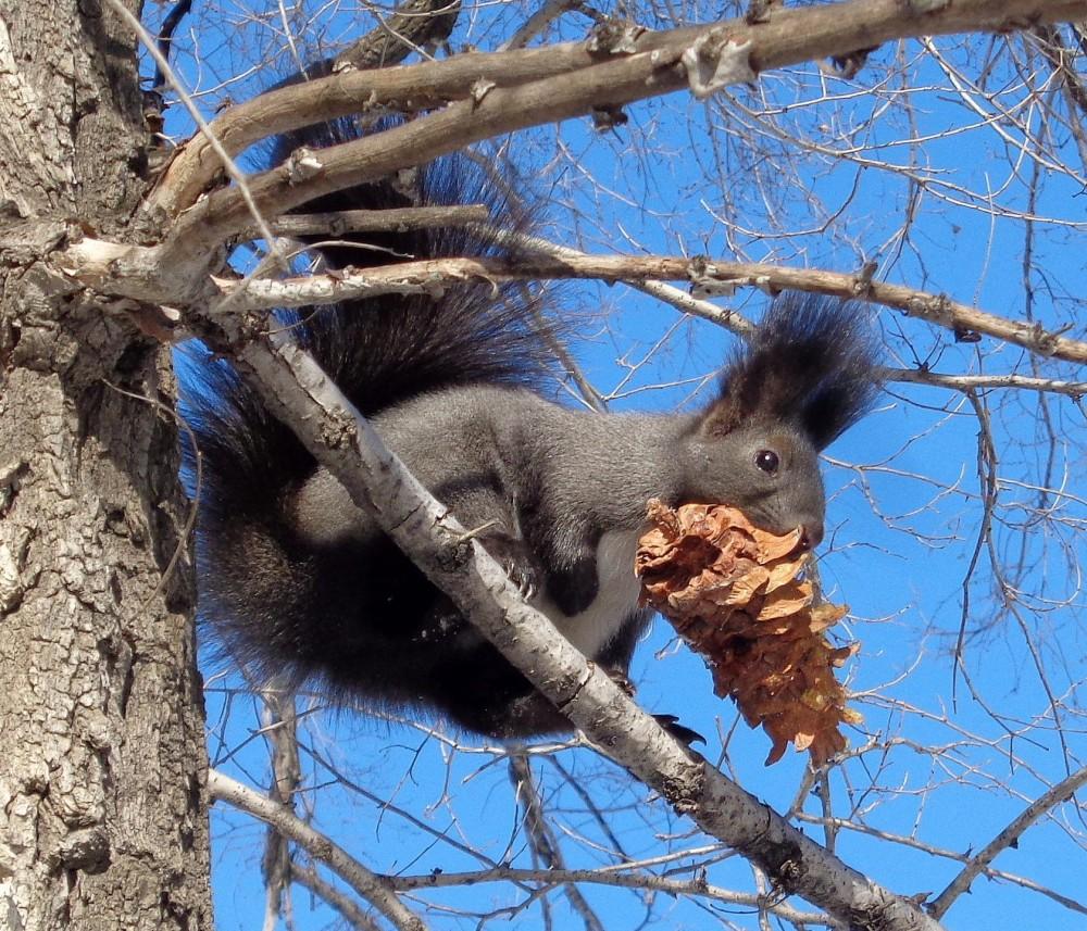 И орешки все грызет...