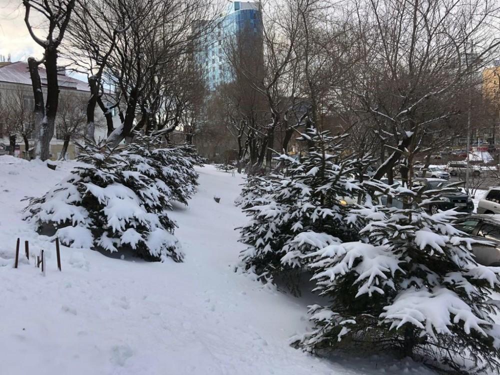 Зимняя весна или весенняя зима