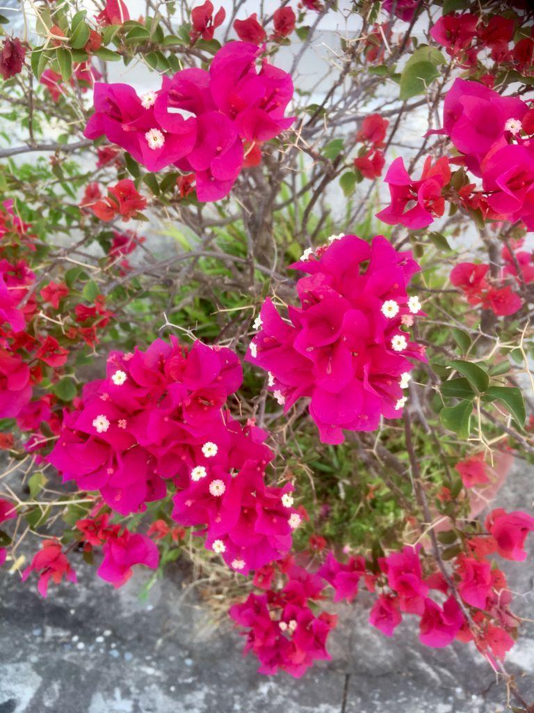 Вьетнам. Март. Цветы.