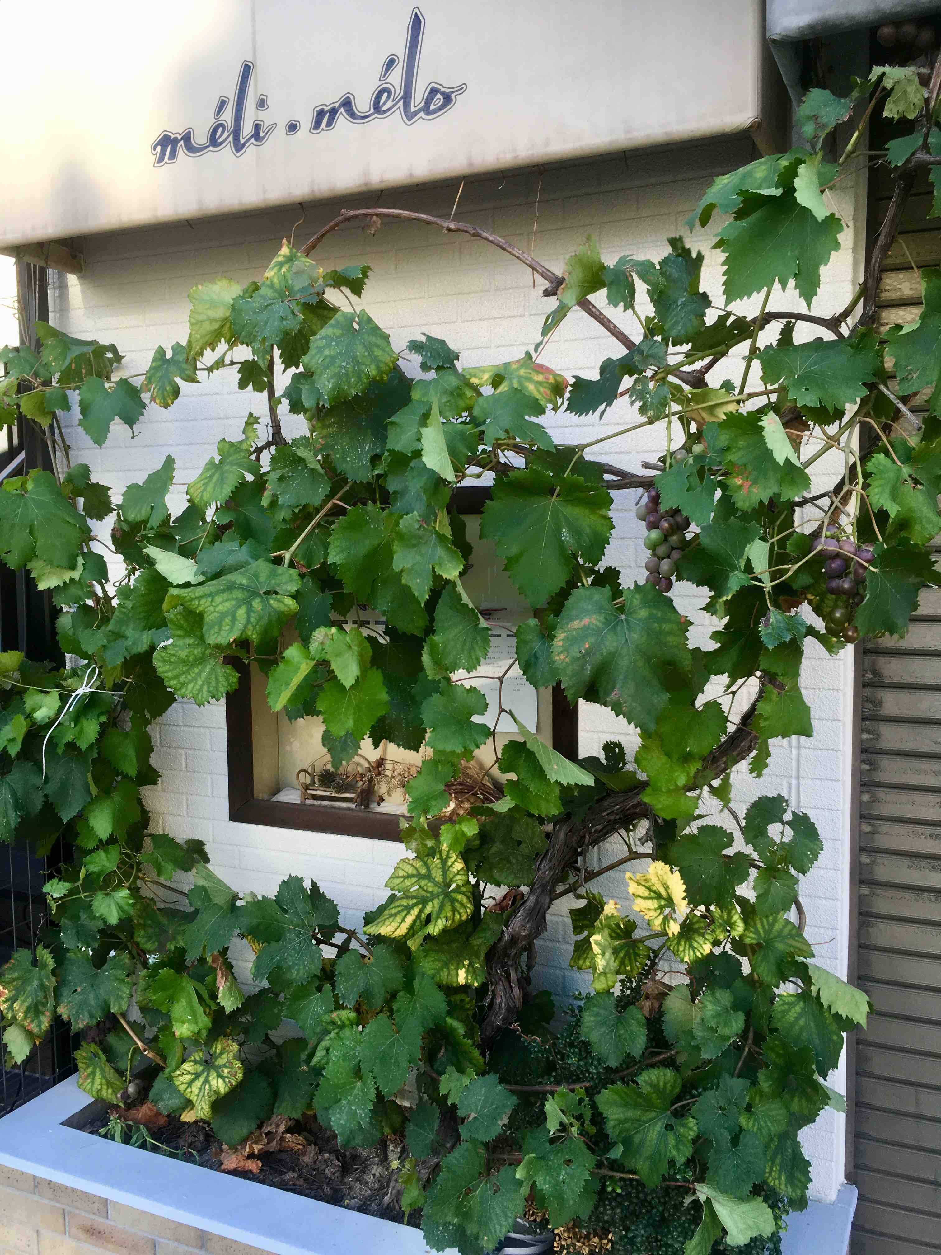Виноградники Киото
