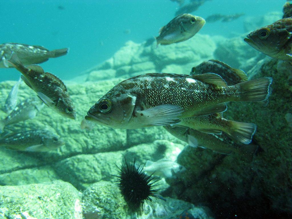 Подводный мир залива Петра Великого