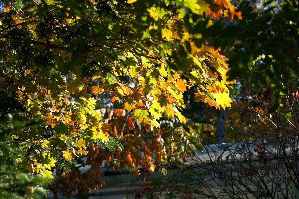 Приморская осень