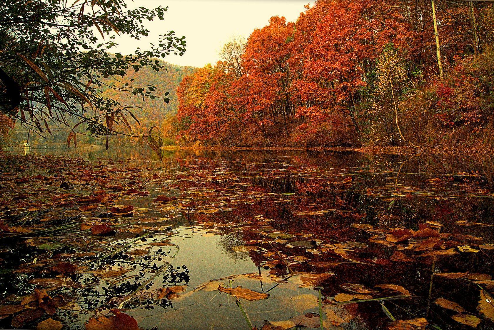Ярко-рыжими красками вспыхнула осень...