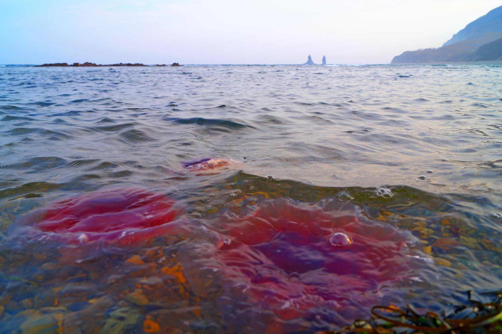 Осенние медузы