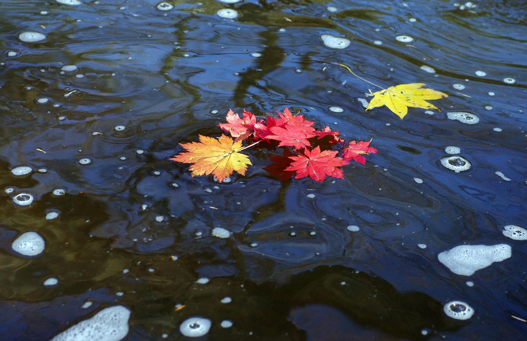 Поплыла осень хороводом листьев...