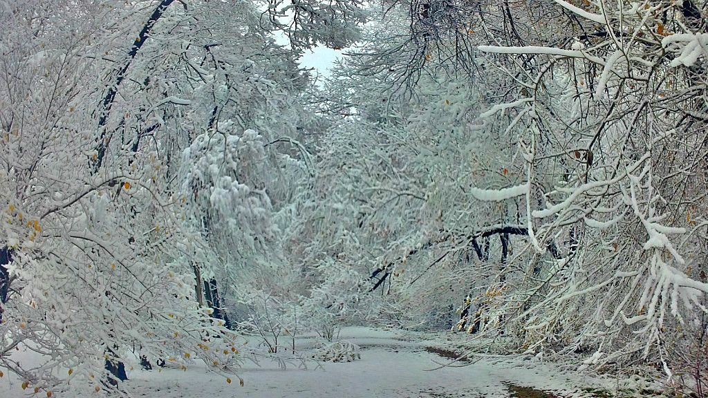 Снежный Арсеньев