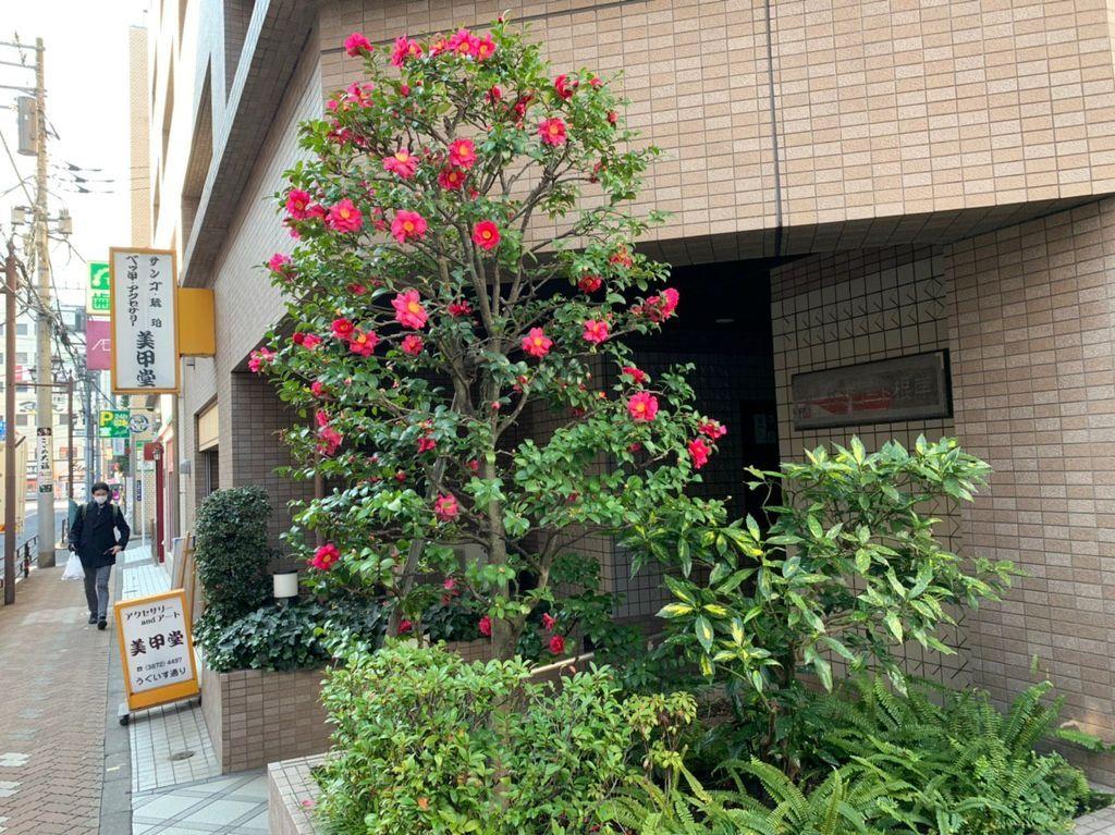 Токийское предновогодье