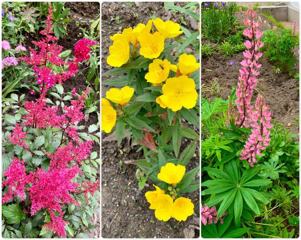Цветочная красота июля - 2