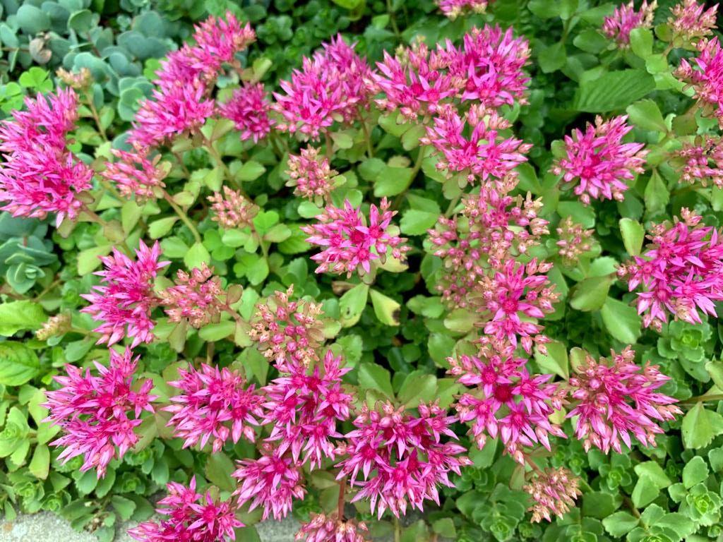 Цветочная красота июля - 3
