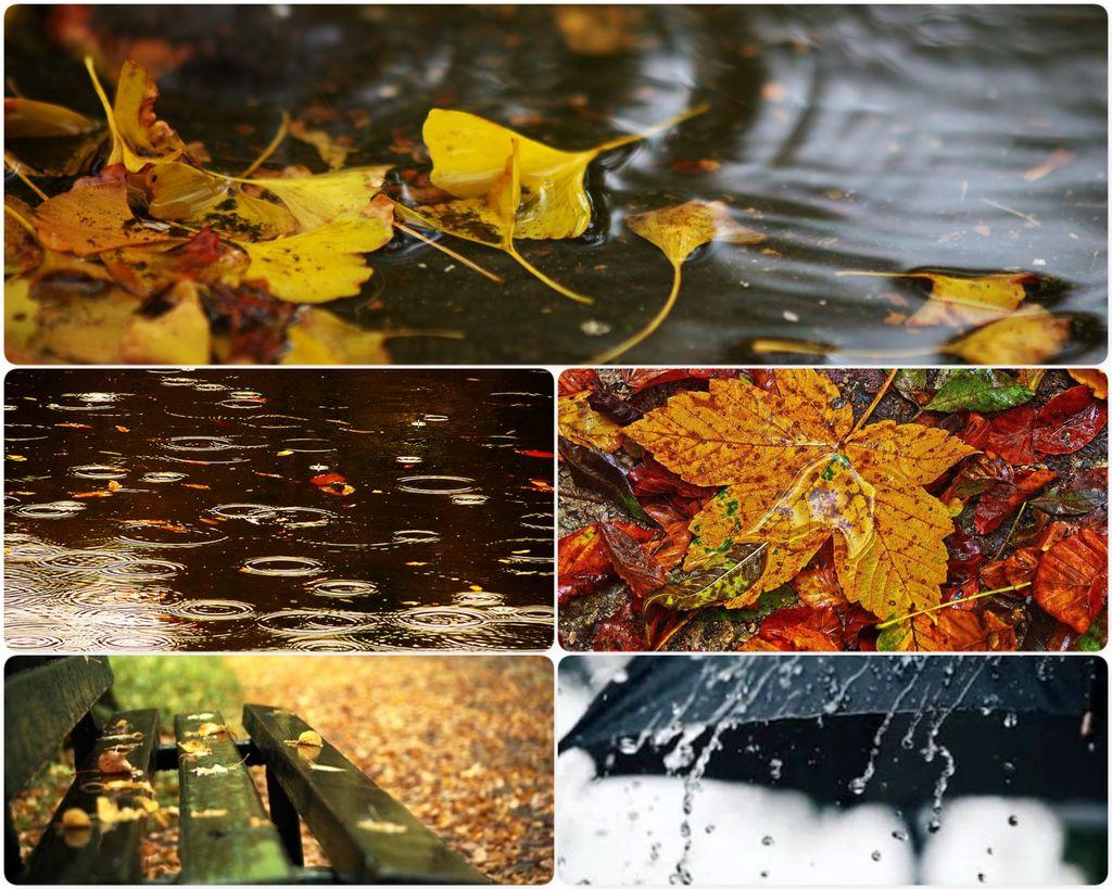 Дождливый октябрь