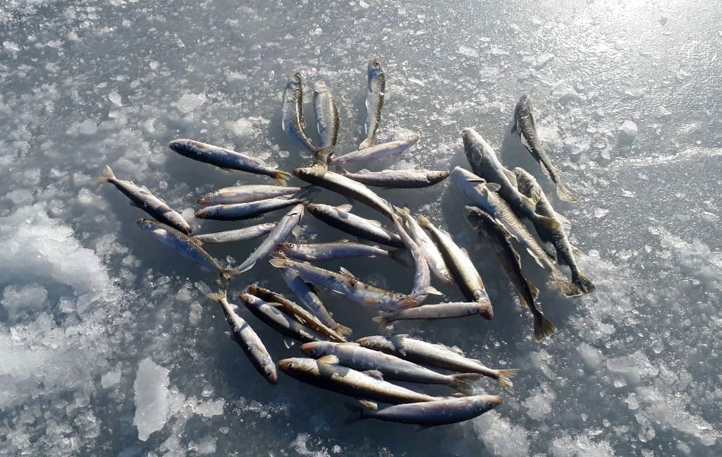 Новогодняя рыбалка...