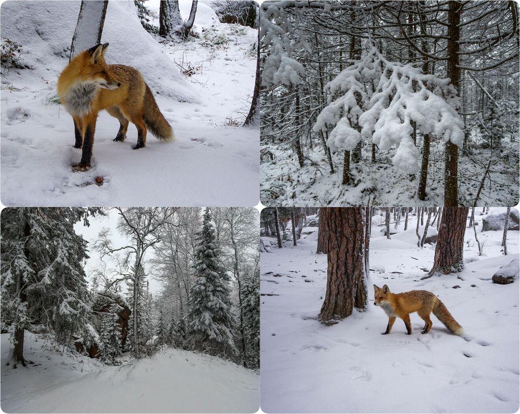 Встреча в зимнем лесу