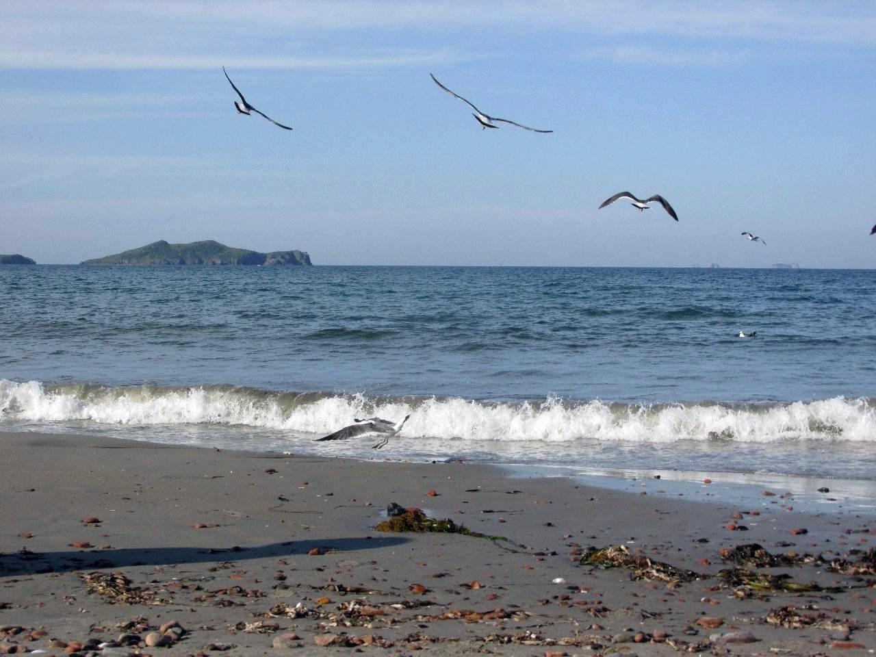 Утро. Море. Чайки. Прибой.