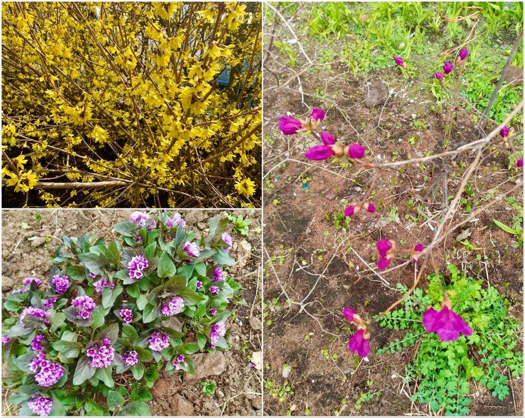 Вот и к нам весна пожаловала...
