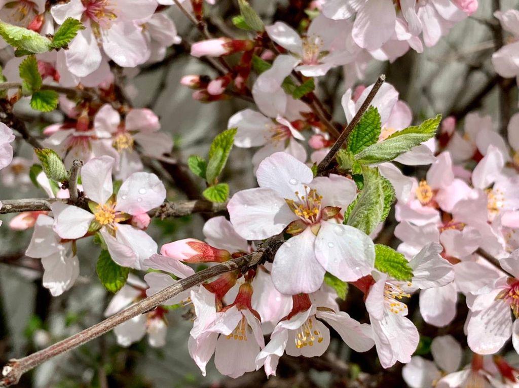 Цветочная красота мая