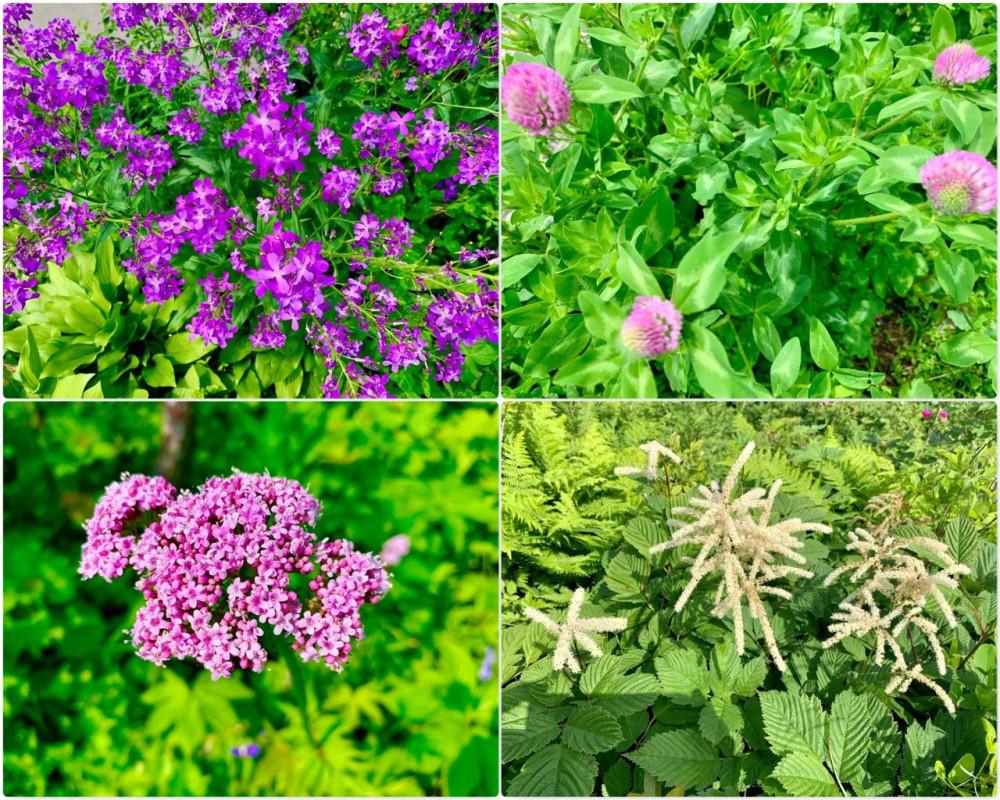 Разноцветье острова Русский