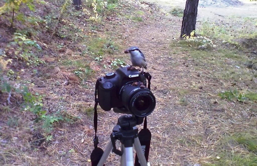 Пернатый фотограф