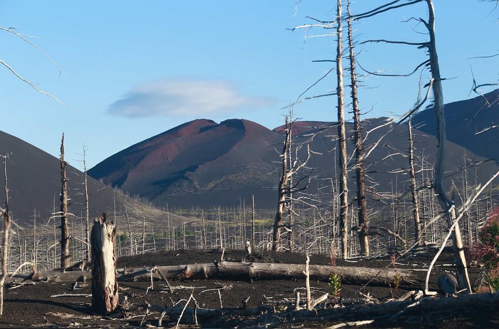 Мёртвый лес, шлаковая пустыня и вулканические евражки...