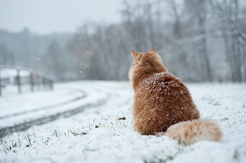 the-world_s-top-10-best-images-of-cats-in-snow4