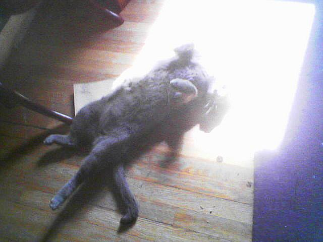 solar powered kitty