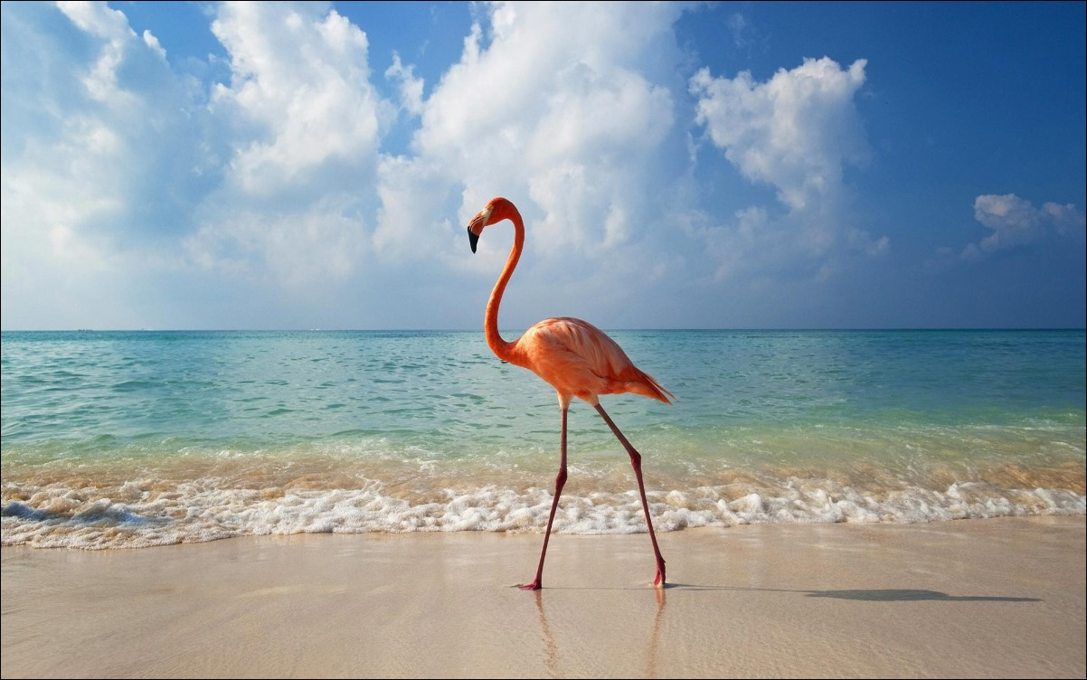 flamingo_bird_on_beach_hd_widescreen_wallpapers_1920x1200