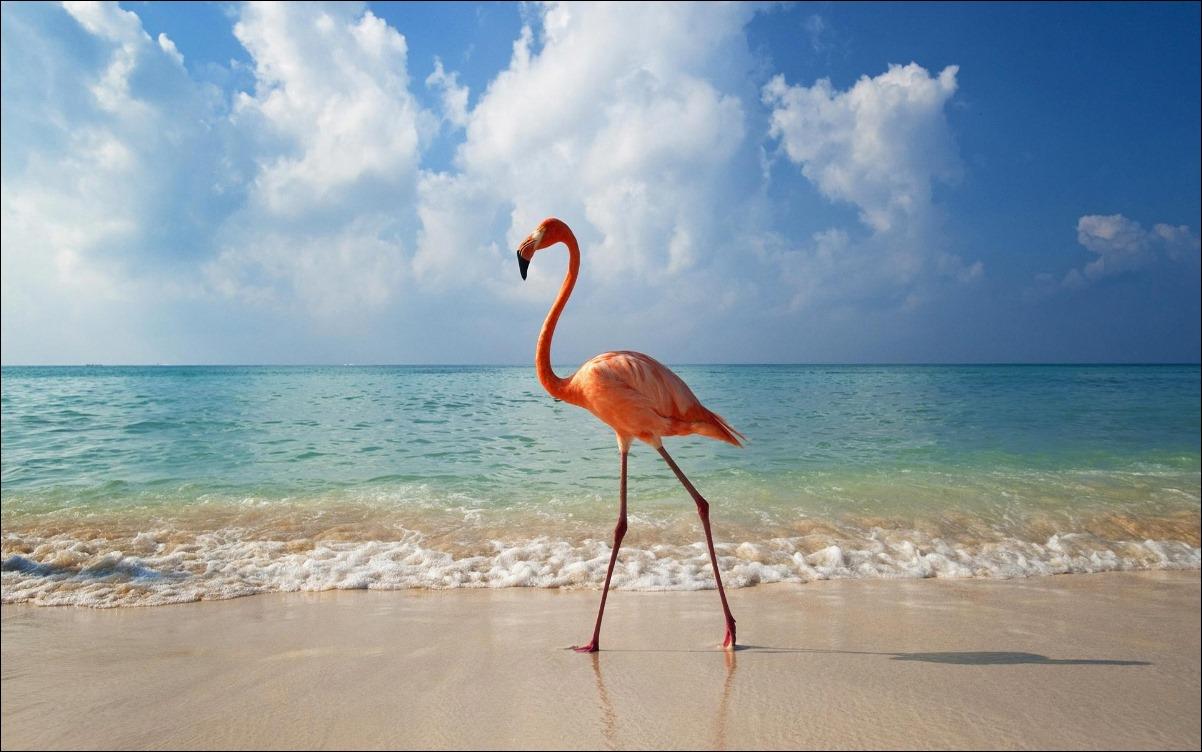 flamingo_bird_on_beach_hd_widescreen_wallpapers_1920x1200