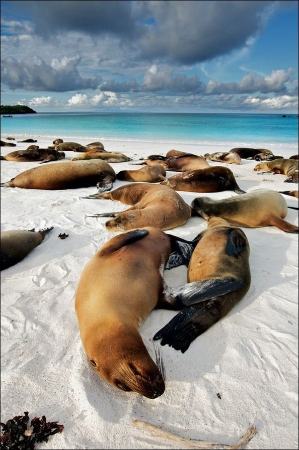 galapagos-by-trevor-cole